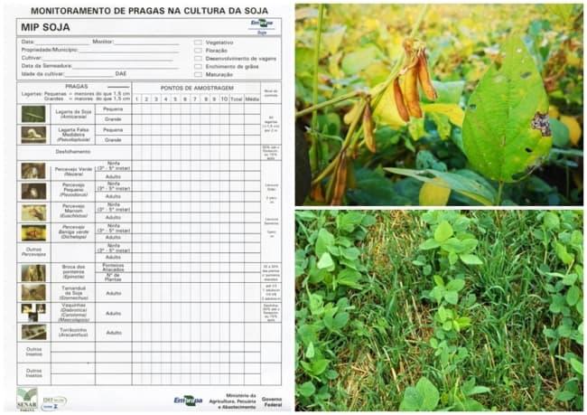 dicas para melhorar cultivo da soja