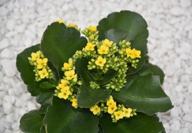 As plantinhas podem ser usadas em ambientes internos e externos