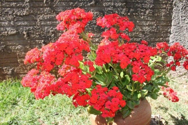 Reserve um local com luz solar para abrigar sua plantinha