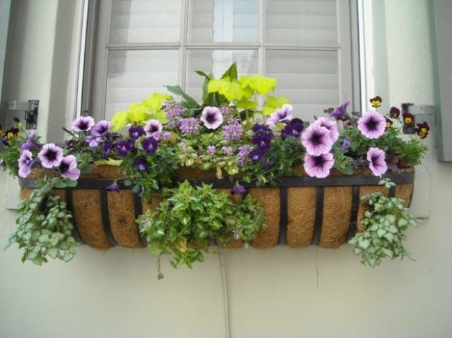floreira de janela de ferro estilosa