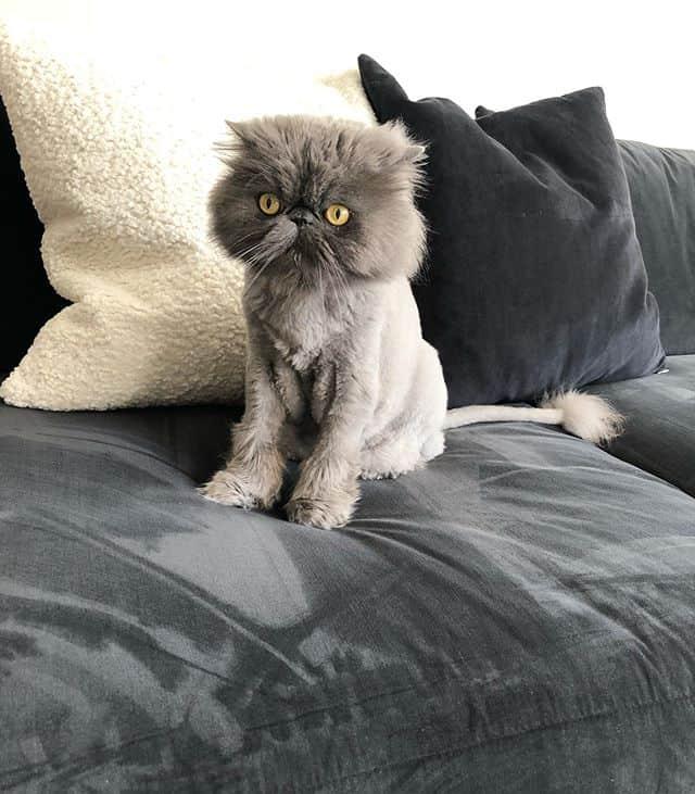 gato Brutus