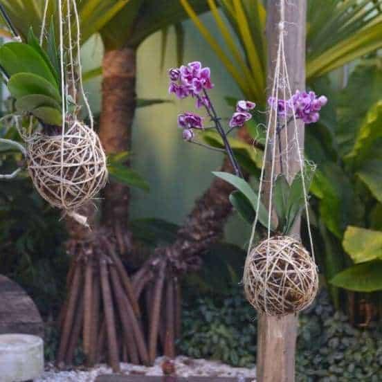 mini orquídeas em mini jardim