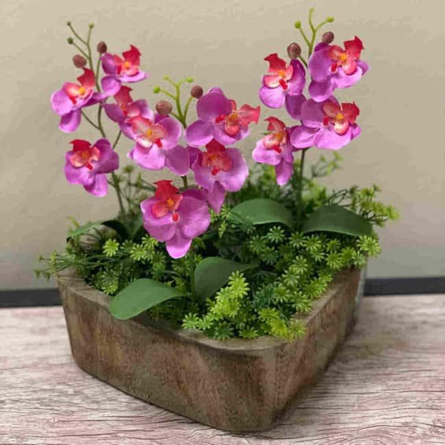 mini orquídeas em vaso de madeira