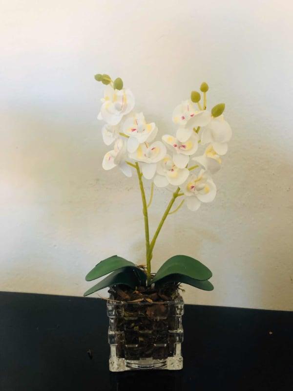 mini orquídeas em vaso transparente