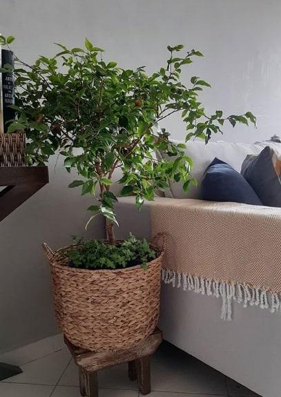 sala decorada com vaso de jabuticabeira