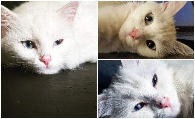 perfil para quem gosta de gatos para seguir no instagram
