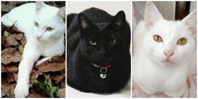 perfil do instagram para gatos angorá