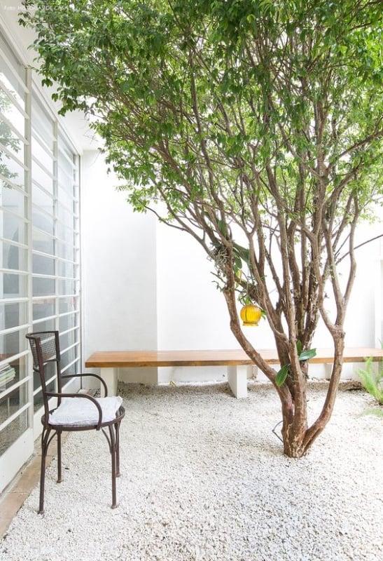 quintal simples com jabuticabeira
