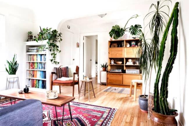 Apartamento decorado com plantas de sombra ficam muito elegantes