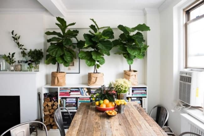 Apartamento decorado com plantas usando cada espaco disponivel