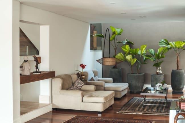 O uso de vasos de plantas em apartamentos tem virado tendencia