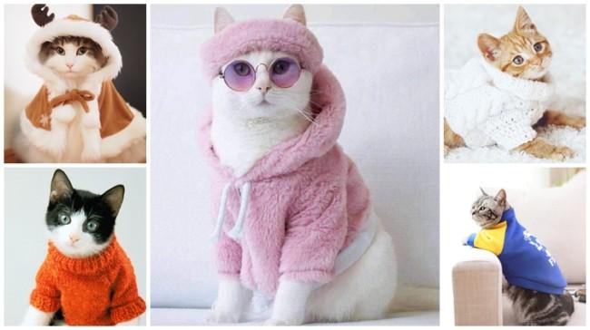 roupas para gatos