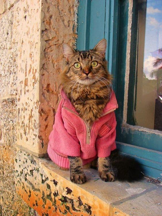 casaco de inverno para gato