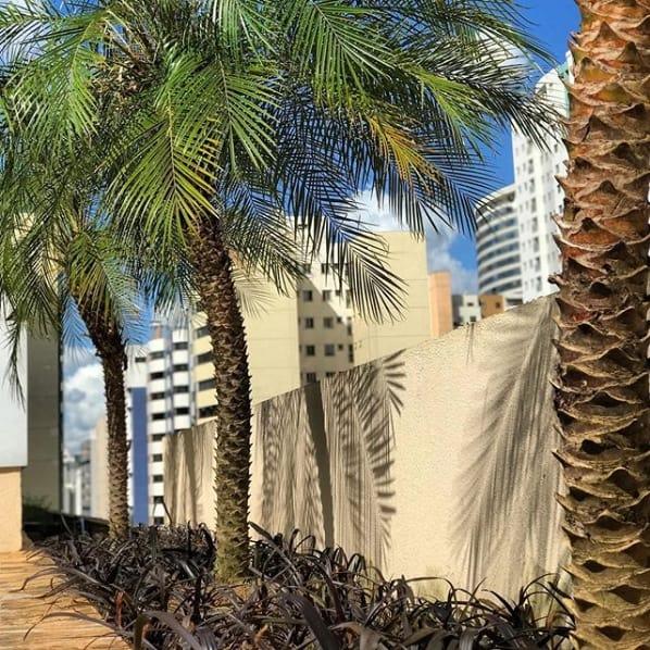 jardim proximo do muro com palmeira fenix