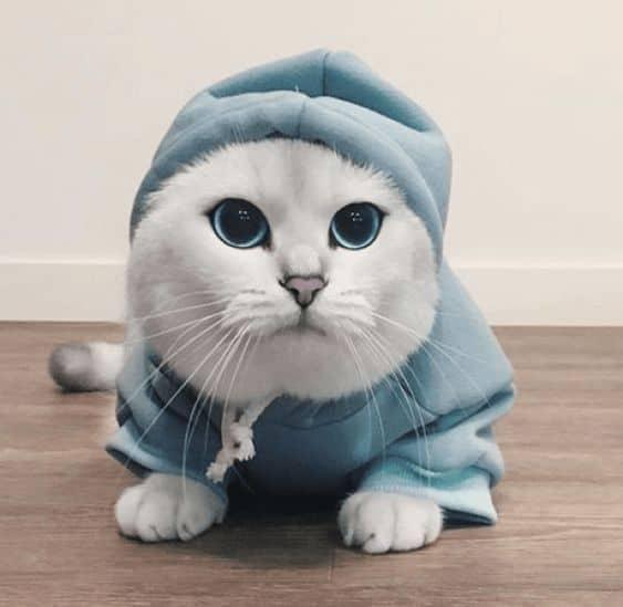moletom para gato com capuz
