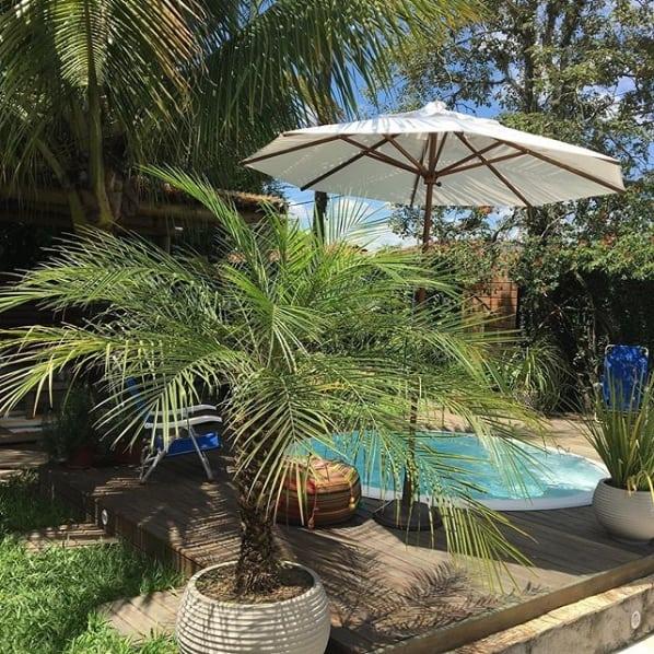 jardim externo com vaso de palmeira fenix