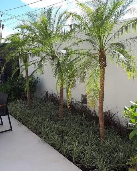 jardim estreito com palmeira fenix