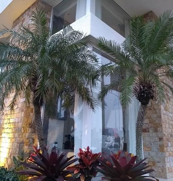 fachada de casa moderna com palmeira fenix no jardim