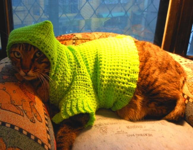 gato com roupa de croche com capuz