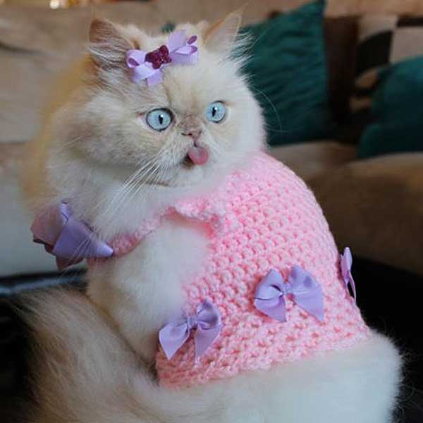 =roupa de croche para gata