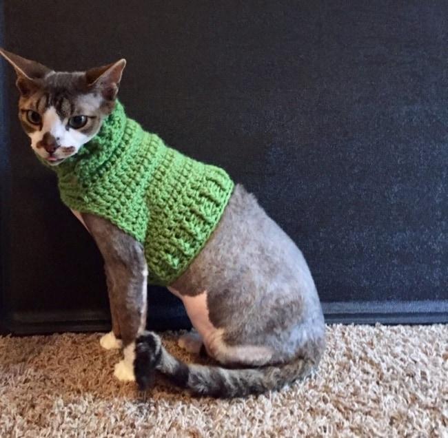 roupa simples de croche para gato