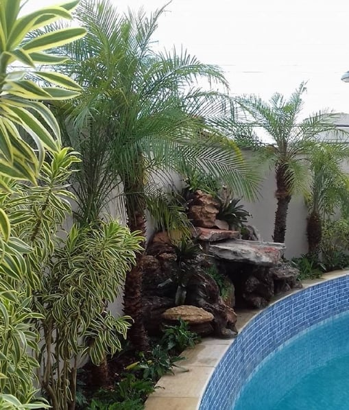 jardim na area da piscina com palmeira fenix