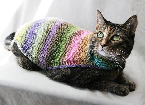 roupa de trico para gato