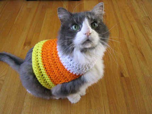 gato com roupa colorida