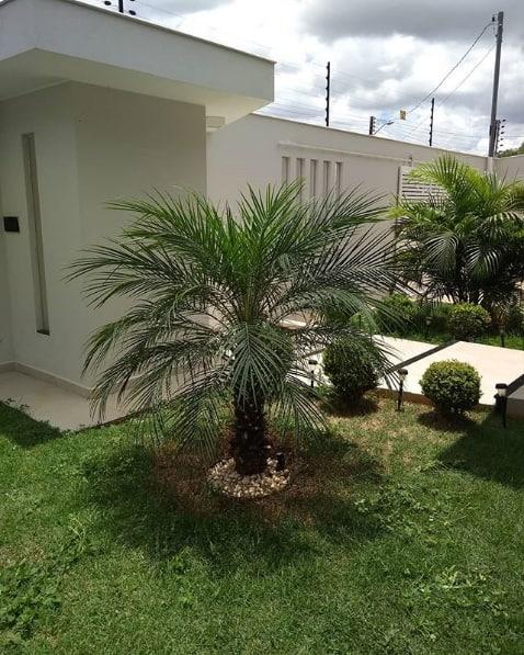 jardim gramado com palmeira ana