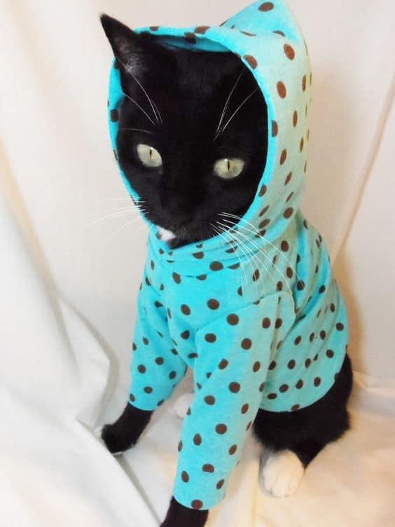 gato com roupinha de frio com capuz