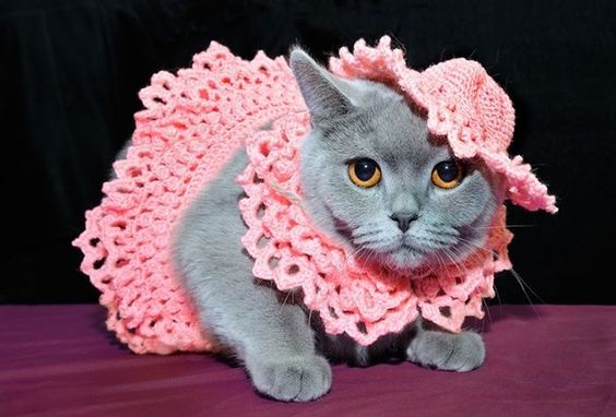 gata com vestido de croche rosa