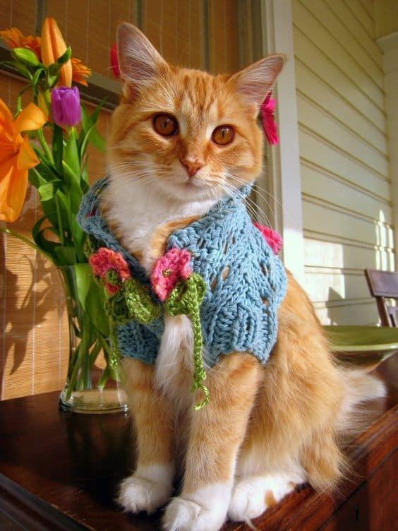 gatinho com roupa de trico