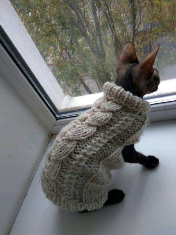 gato com roupinha de inverno feita em trico