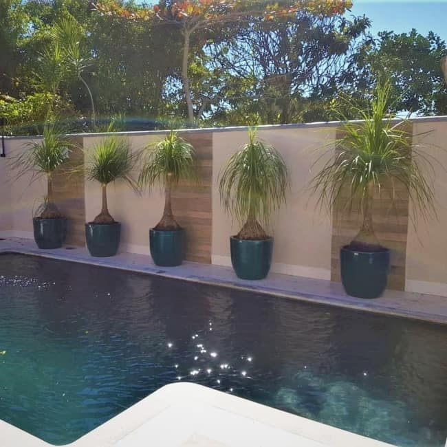 area da piscina decorada com vasos de pata de elefante