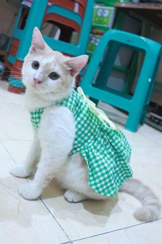 gata com vestido xadrez verde