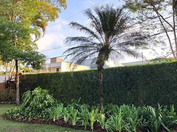 jardim externo com palmeira phoenix