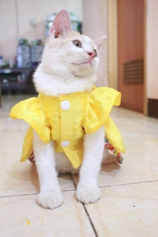 vestido com mangas para gata