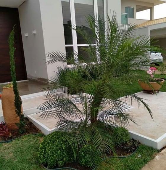 fachada de casa com palmeira fenix no jardim