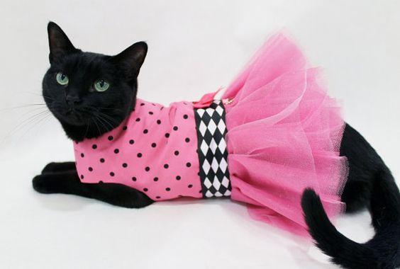 gata com vestido rosa de saia rodada