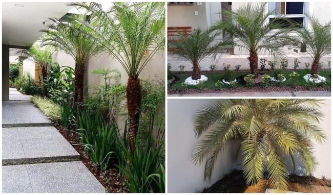 jardim decorado com palmeira fenix