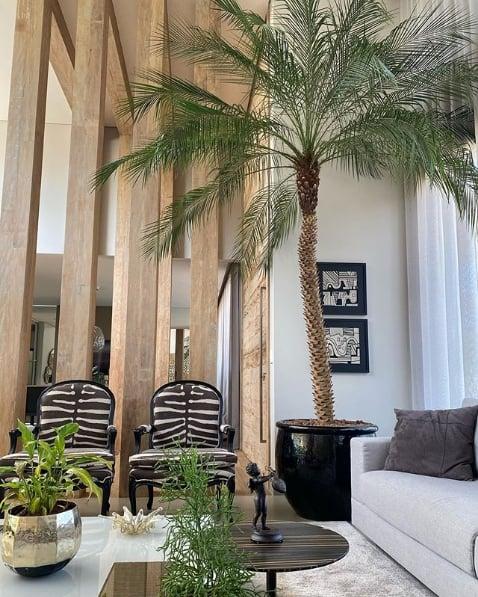 palmeira fenix em vaso decorando a sala