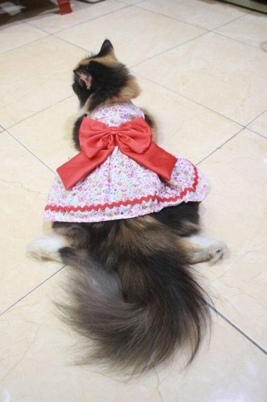 roupa estilo vestido para gata