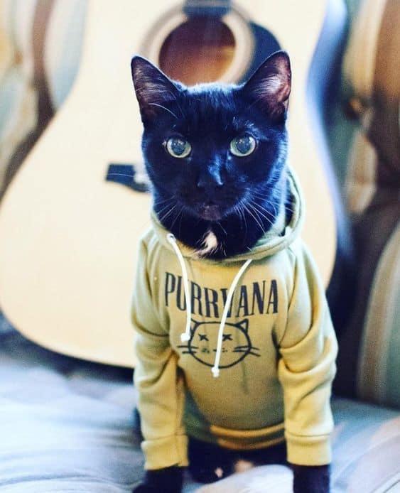 gato com roupinha de moletom