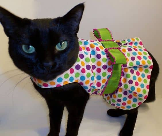 gata com vestido colorido