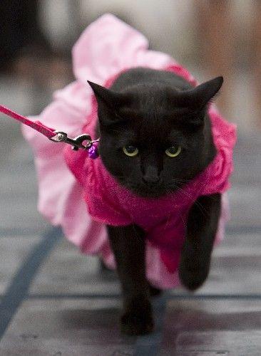 gata com roupa estilo vestido rosa