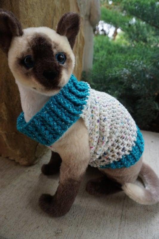 filhotinho de gato com roupa de trico