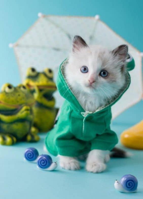 filhote de gato com roupinha de moletom