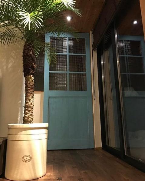 decoracao interna com vaso de palmeira fenix
