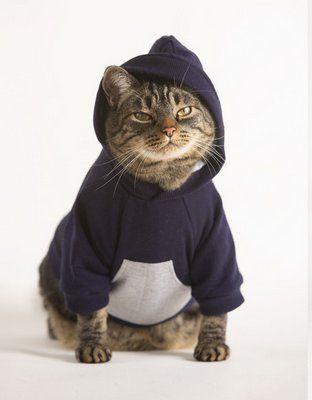 gato com roupa de moletom com capuz
