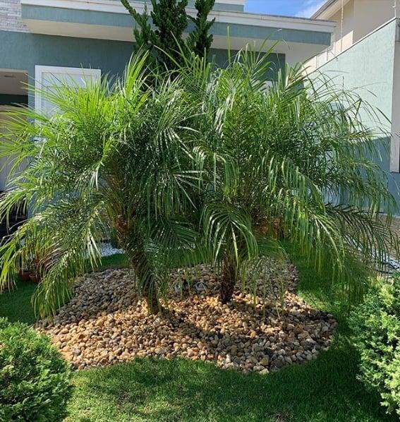 jardim na frente de casa com palmeira ana